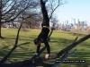 Tree Handstand
