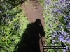 bluebells-coneys-castle-6