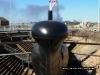 HMS Ocelot - Sonar