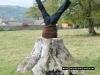 minchenhampton-tree