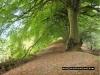 coneys_castle_tree