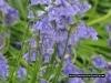 bluebells-coneys-castle-3