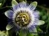 flower2312