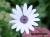 flower_0121