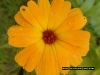 yellow_flower_426