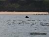 basking-shark-fin