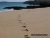 steps-on-the-beach