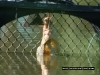 mackay-gooseponds-crocodile-10