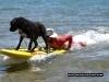 Surf Dog