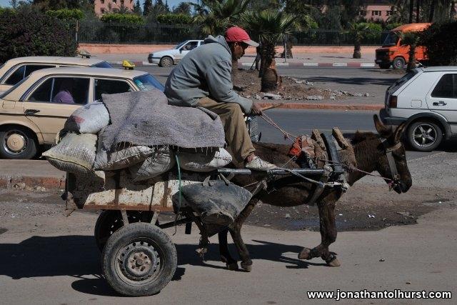 donkey-cruelty-2