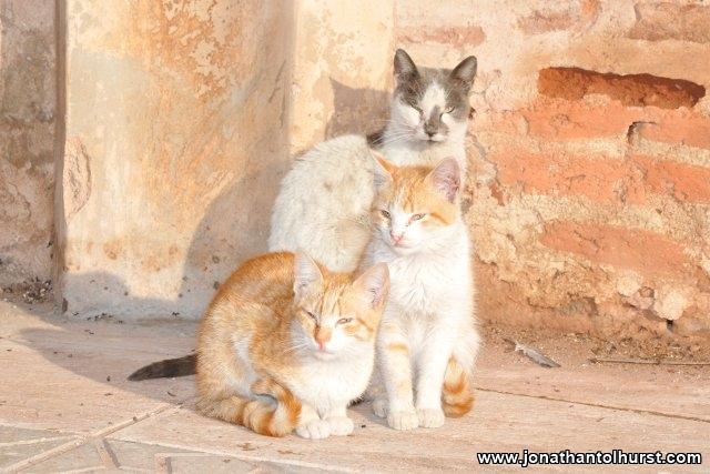 koutoubia-cats