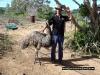 percy-island-emu