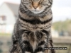 saltash_cat