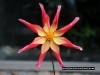 botanical-gardens-flower-2