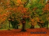 autumn_leaves2
