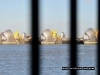 thames-barrier-throught-the-railings