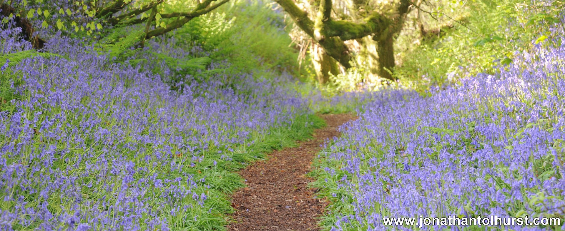 Bluebell Woods Coneys Castle Dorset Jonathan Tolhurst Photography